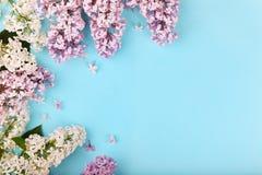 blommar lilan Arkivfoton
