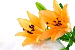 blommar liljan Arkivbild