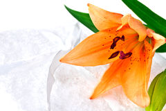 blommar liljan Fotografering för Bildbyråer