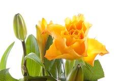 blommar liljar som orangen steg arkivfoton