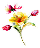 blommar liljatulpan Arkivbild