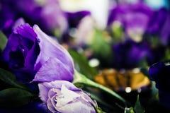 blommar lisianthus Royaltyfri Fotografi