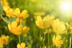 blommar liten yellow Royaltyfri Fotografi