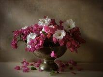 blommar livstid fortfarande Arkivbild