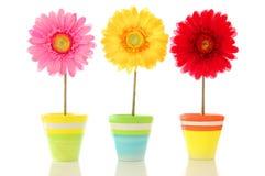 blommar lyckligt Arkivfoton