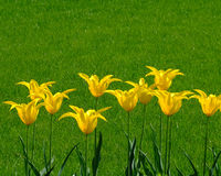 blommar många yellow Fotografering för Bildbyråer