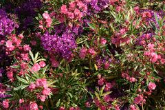 blommar mångfärgat Arkivfoton