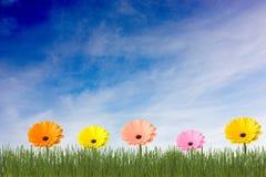 blommar mångfärgat Arkivbilder
