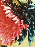blommar mångfärgat Royaltyfri Fotografi