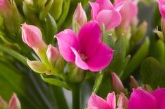 blommar makrofjädern Royaltyfri Fotografi