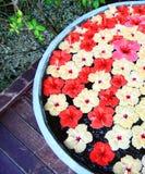 blommar maldives Royaltyfri Bild