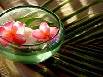 blommar mauritius bröllop Royaltyfria Foton