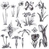 blommar medicinal örtar royaltyfri illustrationer