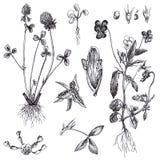 blommar medicinal örtar stock illustrationer