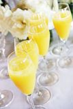 blommar mimosas Royaltyfria Bilder