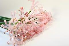 Blommar mjukhet Royaltyfri Foto