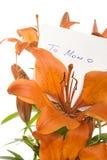 blommar momen till Royaltyfri Foto
