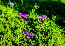 blommar mycket litet arkivfoto