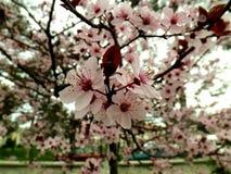 Blommar naturfotografi Royaltyfri Fotografi