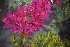 Blommar naturligt ljus Royaltyfri Fotografi