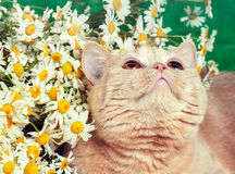 blommar near sitting för kattunge Arkivbild