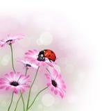 blommar nyckelpigafjädern royaltyfria bilder