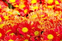blommar nytt arkivfoto