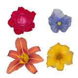 blommar olikt Arkivbild
