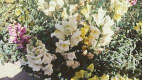 Blommar olikt vibrerande colourfulldagsljus Arkivbilder