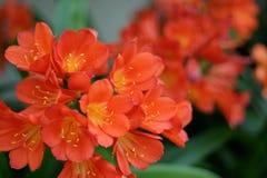 blommar orange skagway Arkivbild