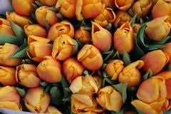 blommar orangen arkivfoton