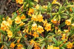 blommar orangen arkivbilder