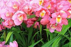 blommar orchidpink Arkivbilder