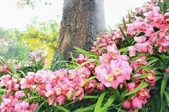 blommar orchidpink Fotografering för Bildbyråer