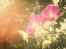 blommar orchidpurple Royaltyfri Bild