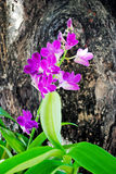 Blommar orchids Arkivfoto