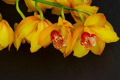 blommar orchidyellow royaltyfri fotografi