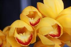blommar orchidyellow Arkivbilder