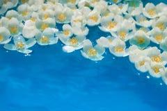 blommar ovanligt vatten Arkivfoto