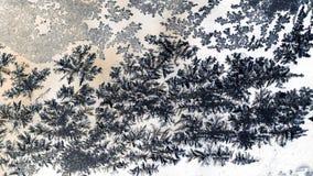 Is blommar på exponeringsglas arkivbilder