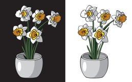Blommar påskliljor i kruka Arkivbilder