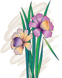 blommar pingstlilja Arkivbild