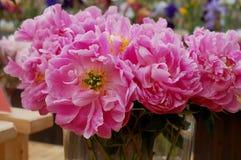blommar pionpink Arkivfoton
