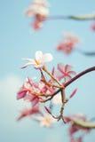 Blommar plats med det blommande trädet Fotografering för Bildbyråer