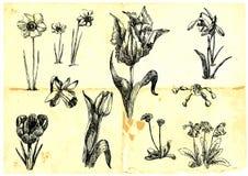 blommar populärt Royaltyfri Fotografi