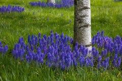 blommar purple Fotografering för Bildbyråer
