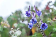 blommar purple Arkivbilder