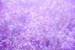 Blommar purpurfärgad bakgrund Royaltyfri Fotografi