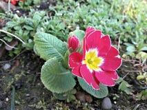 blommar röd yellow Arkivfoto
