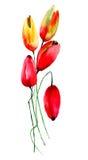 blommar röda tulpan Royaltyfri Bild